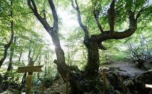La Diputación de León destina 145.000 euros a las reservas de la biosfera y a mejoras en el Camino de Santiago