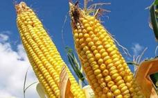 Comienzan las primeras siembras de maíz en la provincia de León que podrían alcanzar las 60.000 hectáreas
