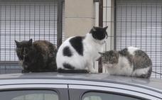 León 'pasará revista' a los más de 500 gatos callejeros que nutren las 45 colonias de la capital