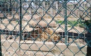 El Ayuntamiento defiende las «buenas condiciones» y la longevidad de los osos del Coto Escolar