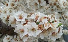 La primavera, a través de las fotos de los lectores de El Norte