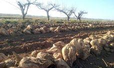 Azucarera reabre su fábrica de La Bañeza