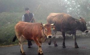 La falta de pastos y el lobo convierten a León en el mejor refugio de los ganaderos asturianos