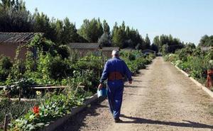 San Andrés estudia la puesta en marcha de huertos urbanos a través de la cesión de una parcela de 4.000 metros cuadrados