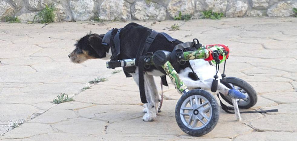 Juzgan a un exalcalde segoviano por disparar desde la ventana de su casa a un perro al que dejó inválido