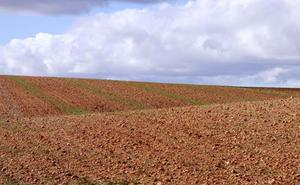 20.000 hectáreas de barbecho en Castilla y León corren peligro de ser declaradas improductivas por la PAC
