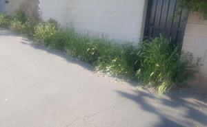Ciudadanos acusa al Gobierno municipal de «desidia» y «dejadez» en la gestión de la limpieza y desbroce de las malas hierbas en San Andrés