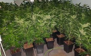 Dos detenidos en San Andrés por cultivo de marihuana y usurpación de un inmueble deshabitado