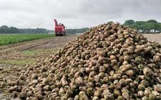 Azucarera finaliza la campaña en la zona norte con 544.841 toneladas molturadas en La Bañeza