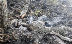 León suspende en planificación de incendios y se sitúa como una de las zonas con más riesgo
