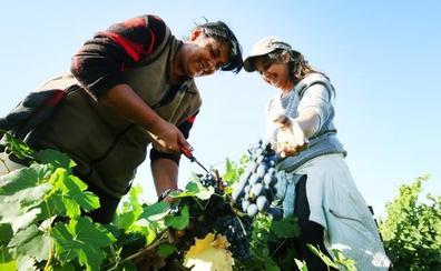 La Junta acelerará la recuperación del subsidio a los parados que se incorporen a la vendimia en El Bierzo