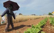 El Banco de Tierras abre el plazo para una nueva edición del taller sobre cultivos de invierno