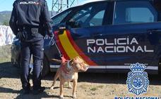 La Policía Nacional retoma mañana en Molinaseca la búsqueda del anciano desaparecido hace casi tres meses en Ponferrada