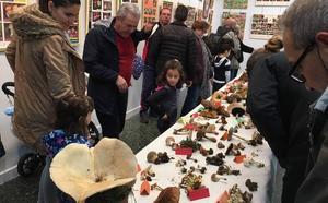 El Consejo cuenta con 20.000 hectáreas para crear el parque micológico del Bierzo