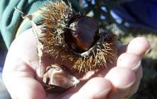 La Reserva de la Biosfera de los Ancares Leoneses presenta los resultados de su estudio sobre el chancro