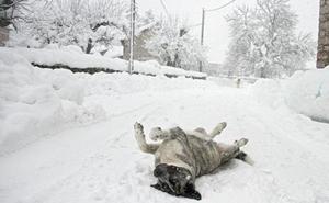 El efecto de la nieve aún se sigue notando en la zona norte de la provincia de León