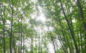 Bosques 4.0