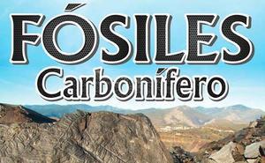 Fabero inaugura el sábado una exposición de fósiles del carbonífero