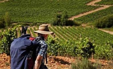 Bierzo Enoturismo participará bajo el paraguas de las Rutas del Vino de Castilla y León en las ferias B-Travel y Sevatur