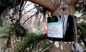 El Colegio de Veterinarios de León advierte de los riesgos de la presencia de 'procesionaria' en los pinares de la provincia