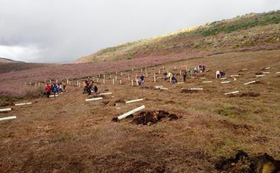 Anllares del Sil organiza una plantación de árboles frutales para favorecer el hábitat del oso pardo