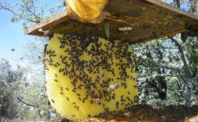 Carucedo acoge mañana una jornada informativa para promover la apicultura ecológica en el Bierzo