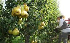 Las plantaciones de manzana y pera se 'salvan' de la fuerte granizada caída en El Bierzo este lunes