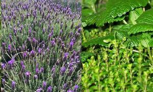 Salas de los Barrios acoge un curso estival de la ULE sobre plantas aromáticas y medicinales