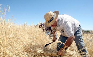 Camponaraya pone en valor su pasado y presente agrícola con la III Fiesta de la Maja