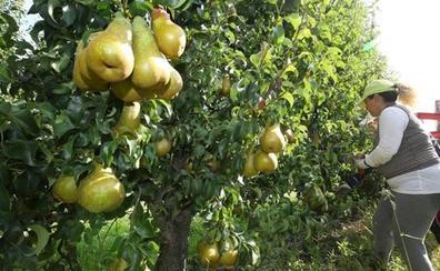 Una ruta entre manzanos y perales