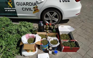 La Guardia Civil desmantela un punto de cultivo de marihuana en Cacabelos y detiene e investiga a dos personas