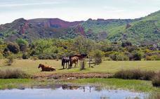 Villafranca acogerá un curso para descubrir el patrimonio natural del Bierzo