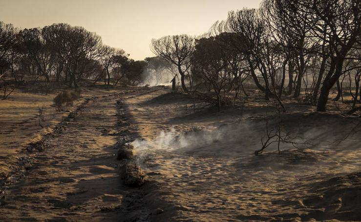 El incendio continúa activo en Doñana
