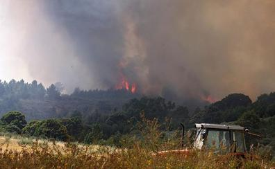 Quintana del Castillo recuperará su vegetación con la plantación de 29.000 árboles en 45 hectáreas afectadas por el incendio de 2015