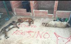 Matan en Valderas a los perros del último lanceador del Toro de la Vega