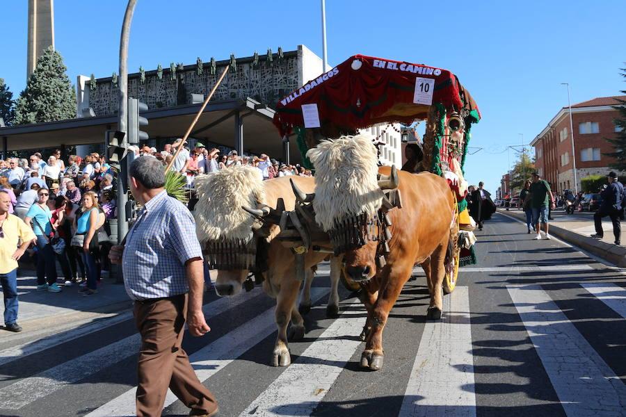 Pendones y carros por San Froilán