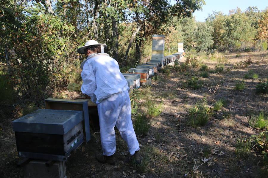 De la hostelería a la apicultura