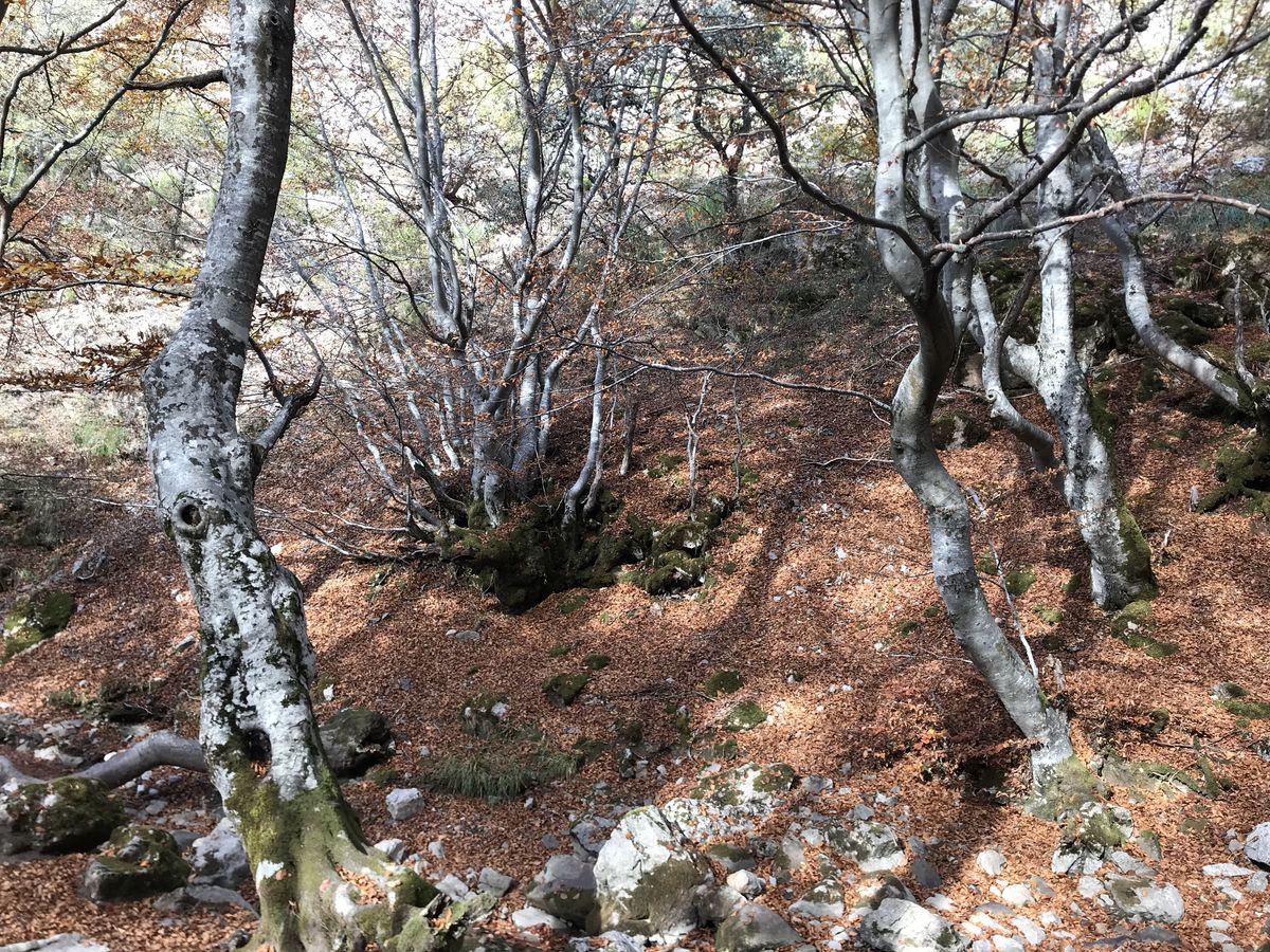 Un bosque con encanto