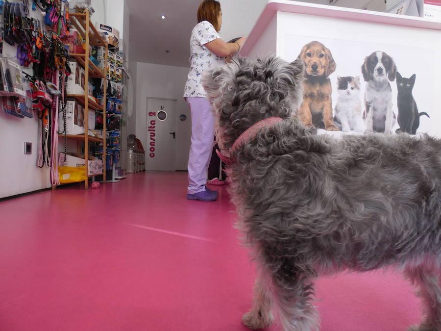Clínica veterinario San Isidoro