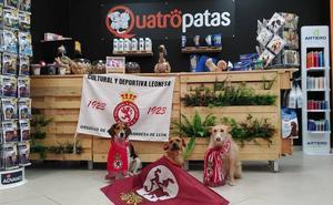 Quatropatas, especialistas en la alimentación de tu mascota