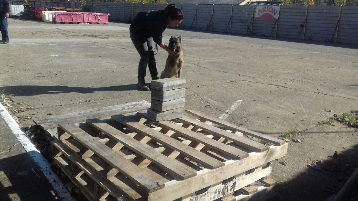 Educando desde el cariño, en Spanish Dog