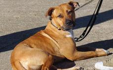 Spanish Dog te ayuda a educar y adiestrar a tu perro en un divertido entrenamiento