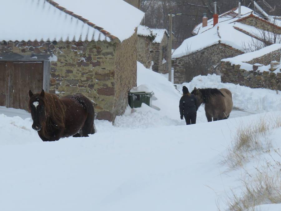 Rescate en la nieve
