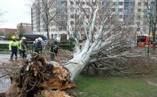Activada la fase de alerta en toda la comunidad ante la previsión de nevadas y fuertes vientos