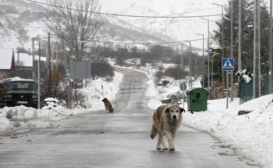 Activada la fase de alerta por nevadas en las carreteras del Estado de León
