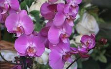 Luis Alsán, una flor especial para una madre