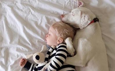 La emotiva historia del perro maltratado que se asusta de todos menos de este bebé