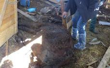 12 meses de cárcel y tres años de inhabilitación para un ganadero en Villazala por dejar morir a tres caballos