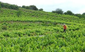 El éxito del vino del Bierzo