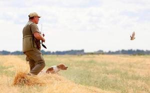 La media veda comienza el 15 de agosto, con una flexibilización de la captura del conejo por su «sobreabundancia»